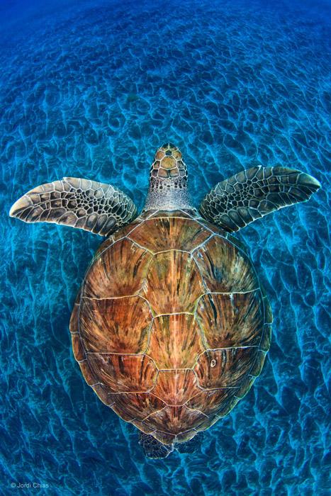 jordi-underwater-photography