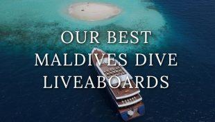 maldives-liveaboards