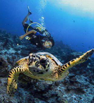 Maldives-dive