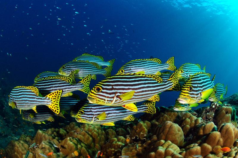 Carpe-diem-diving