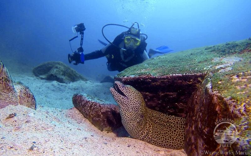 Oman-morey-eel