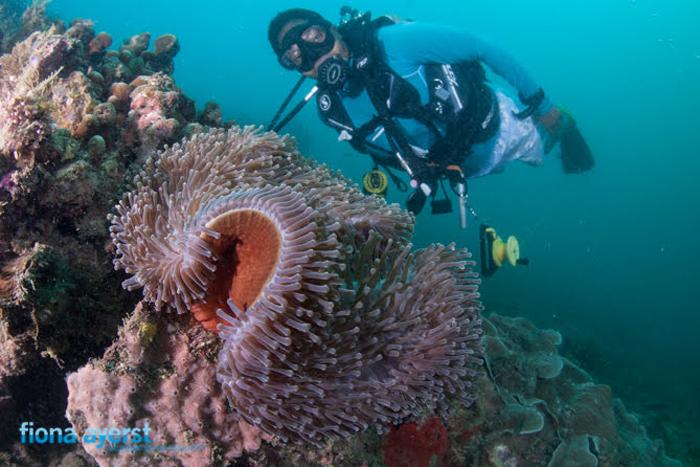 diving-mozambique