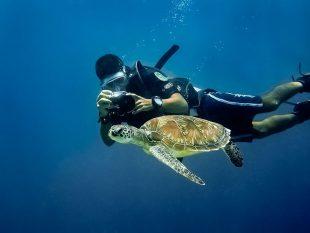 turtle-dive-mauritius