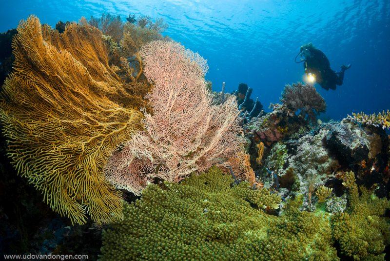dive-bali-reef