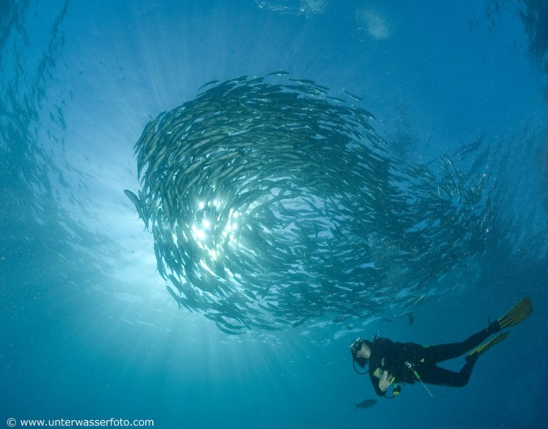 diver-indonesia-shoal
