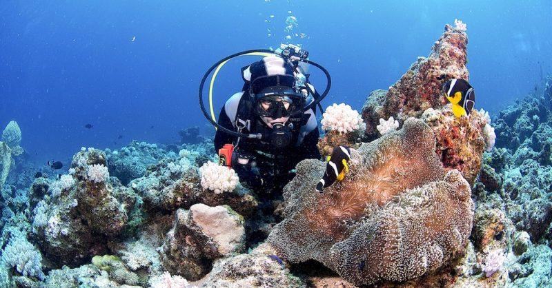 divers-north-mauritius