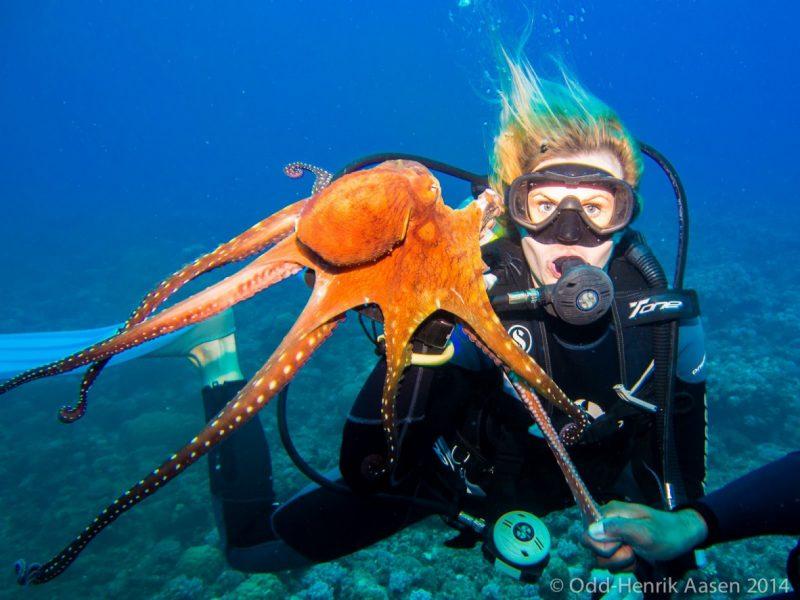 pro-diver-mauritius