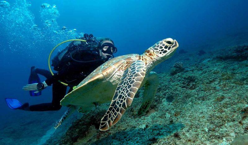 diver-mauritius