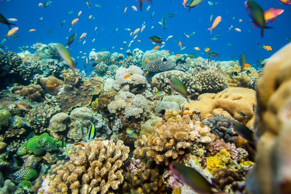 diving-pemba-island