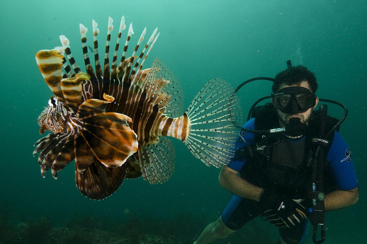 Diving-oman