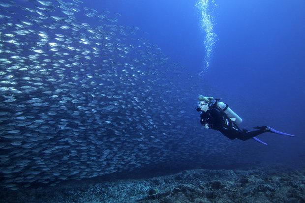 Diving in Baja California, Mexico