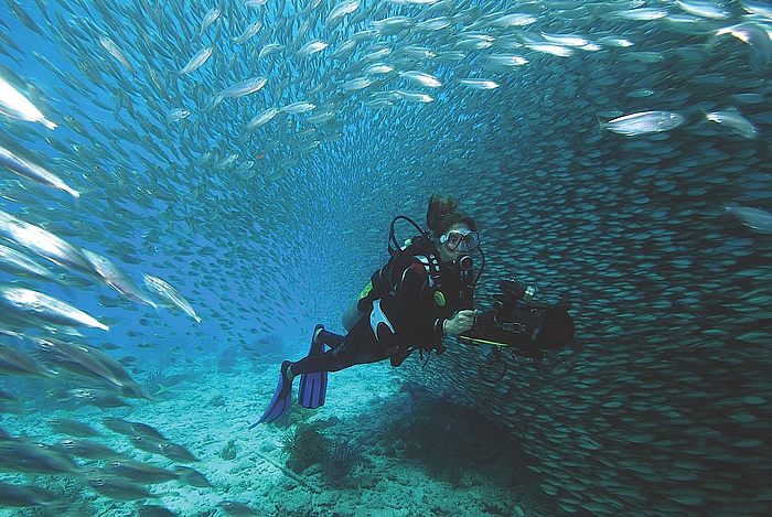 Diving in Bonaire, Dutch Antilles