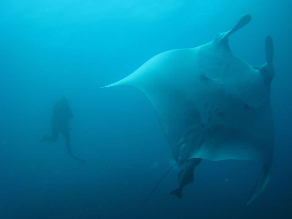 Diving in Galapagos Islands, Ecuador Galapagos