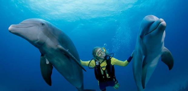 Diving in Outer Islands, Bahamas