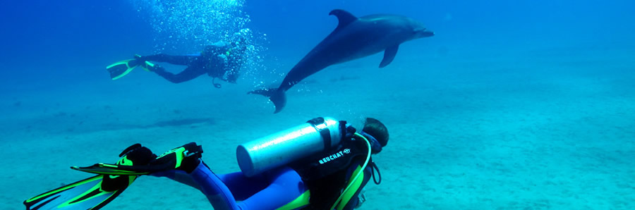 The best Dive holidays!