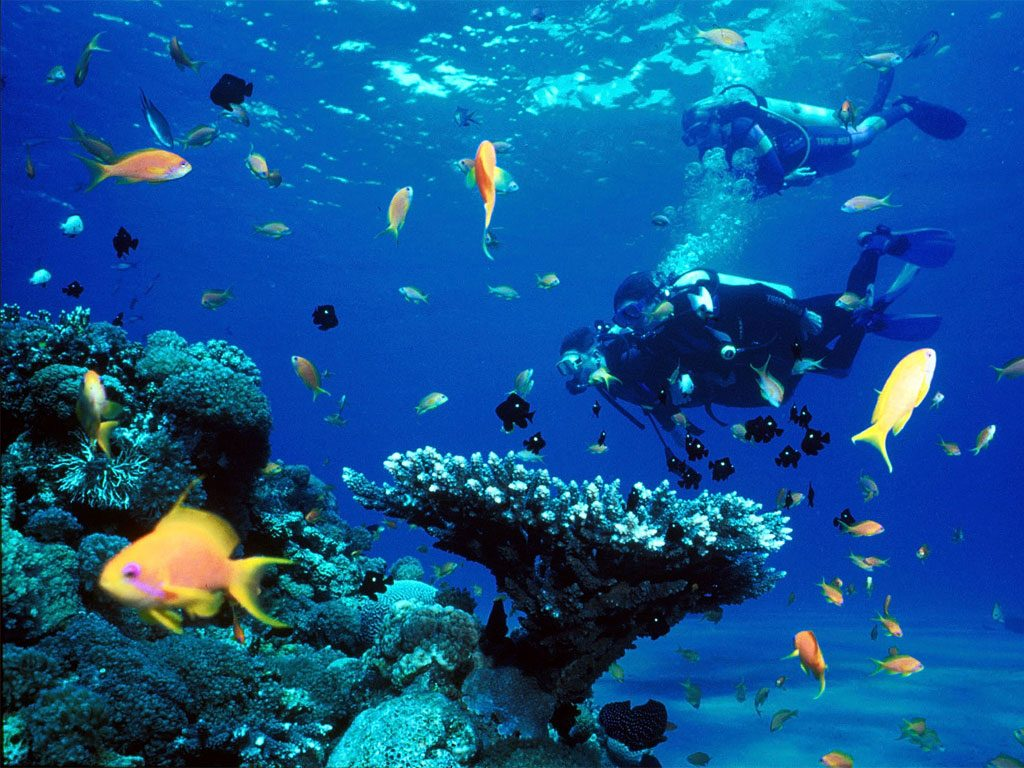 bonaire easy diving | dive reviews & reports