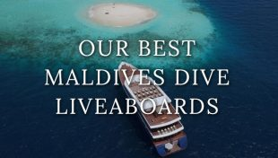 maldives-liveaboards
