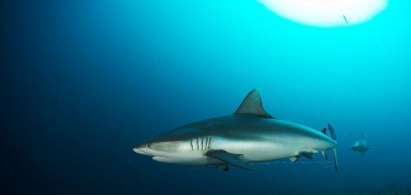 diving-maldives