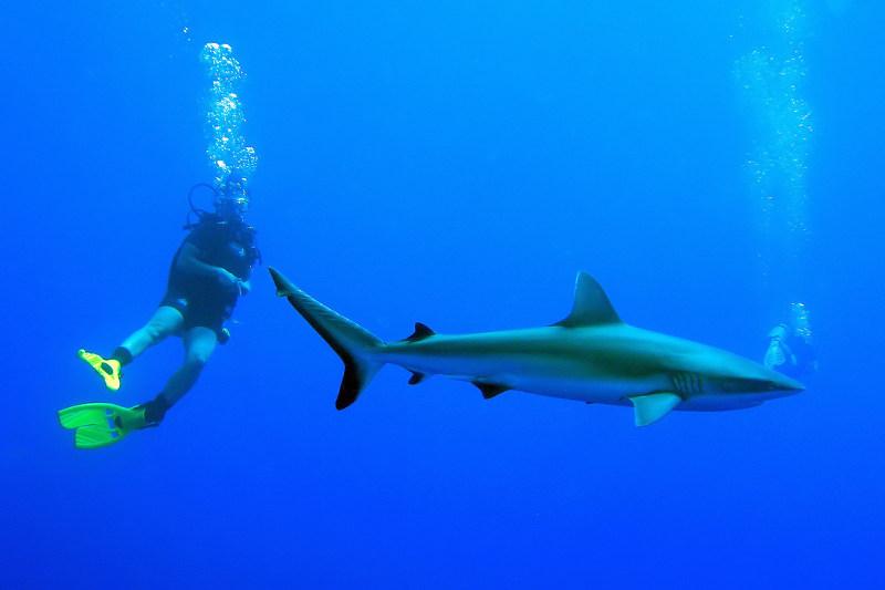 Maldives-Reef-Shark