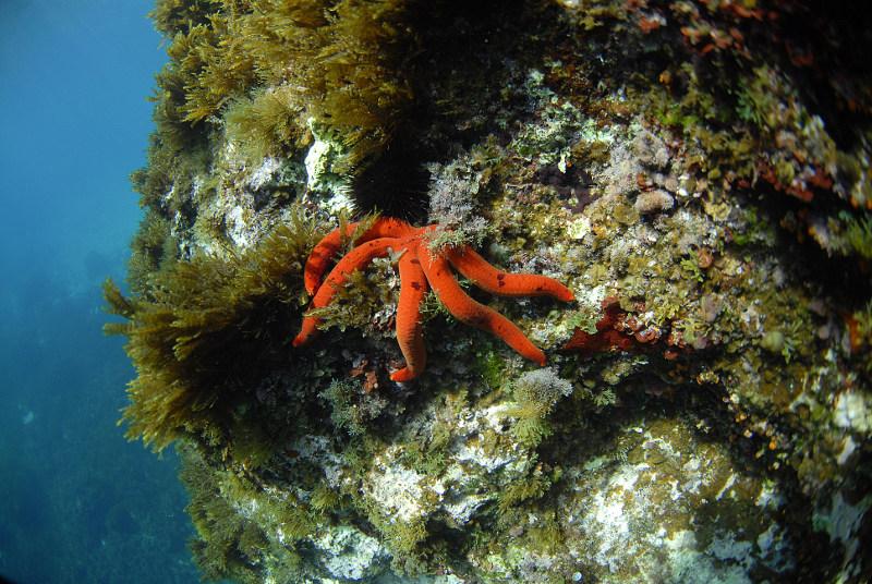 Underwater-starfish-Malta
