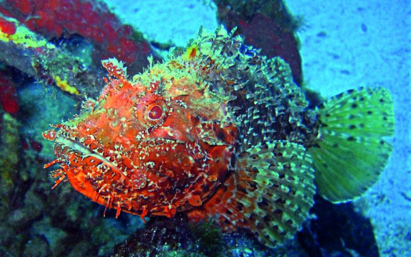 Underwater-Malta
