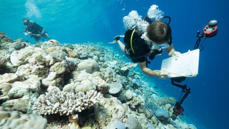 Carpe-Diem-Rescue-a-reef