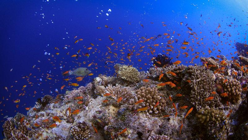 Carpe-Diem-Dive-shallow-reef