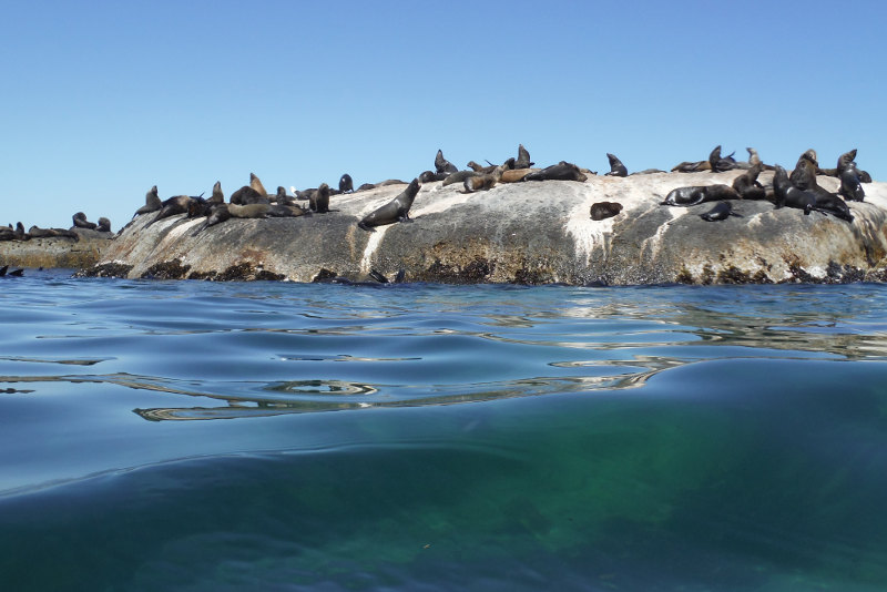 Dyer-Island-Cape-Town