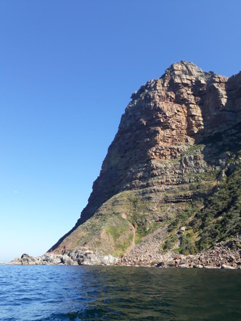 Hout-Bay-Seal-Snorkel