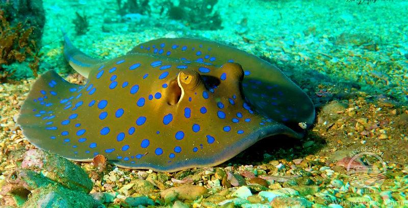 Oman-aggressor-ray