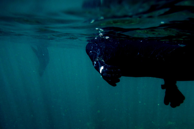 Seal-snorkel-cape-town