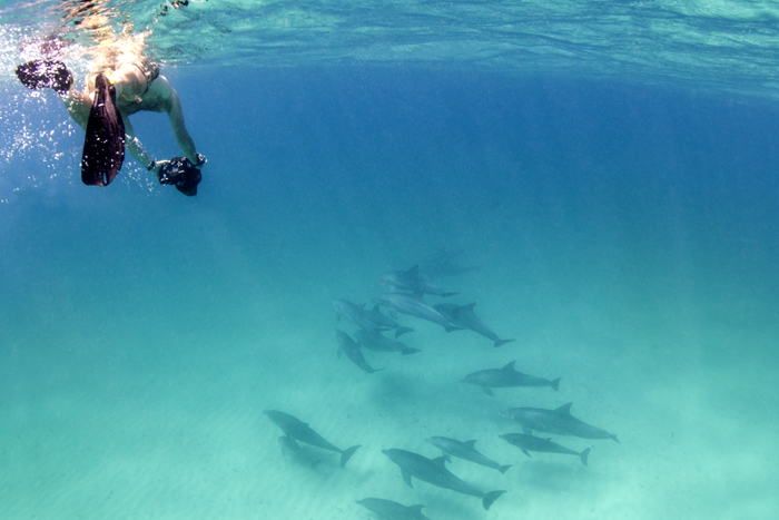 dolphins-mozambique