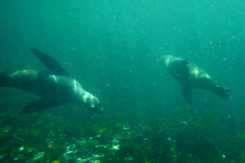 seal-cape-town