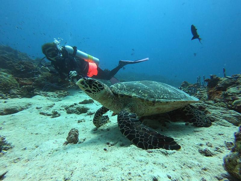 cocoon-dive-turtle
