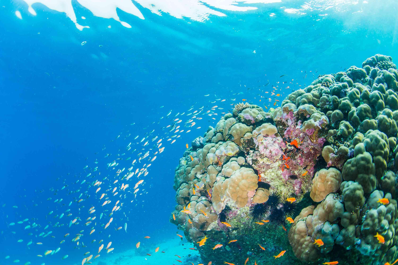 pemba-island-dive