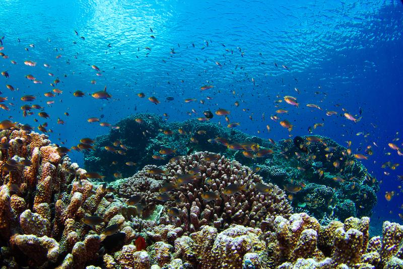 SCRIPPS-Reef-Maldives