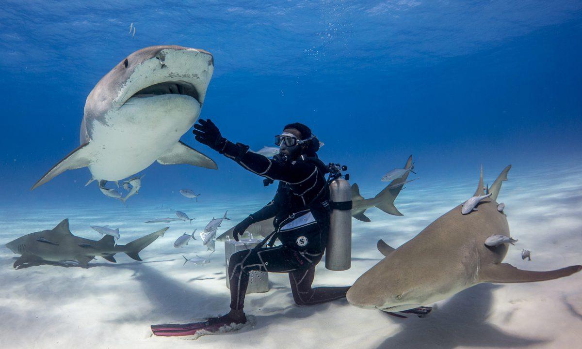 Shark Diving In Florida The Basics Abenaki